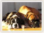 Erfahren Sie mehr über unsere Hunde.