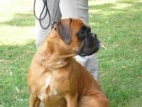 Bilder Heike Hunde 097