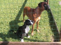 Bilder Heike Hunde Teil 2 001