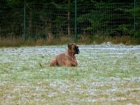 hundeplatz_9